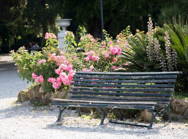 Banc dans un parc entouré de massifs de roses