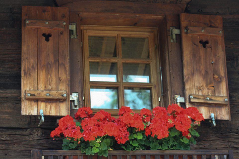 Géraniums sous une fenêtre d'un chalet de montagne